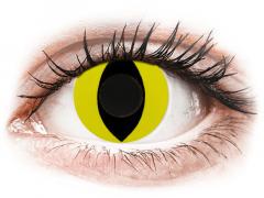 CRAZY LENS - Cat Eye Yellow - vienadieniai be dioptrijų (2 lęšiai)